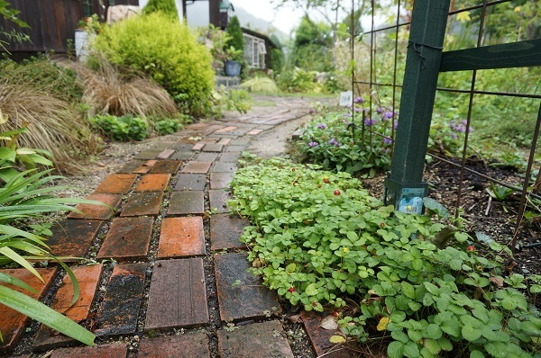 庭をひと回り_e0365880_22253291.jpg
