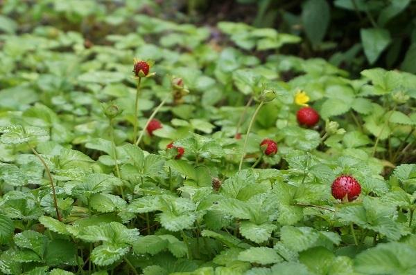 庭をひと回り_e0365880_22253993.jpg