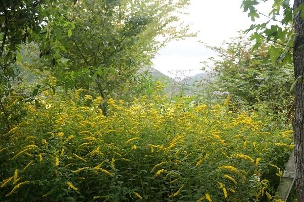 庭をひと回り_e0365880_22255556.jpg