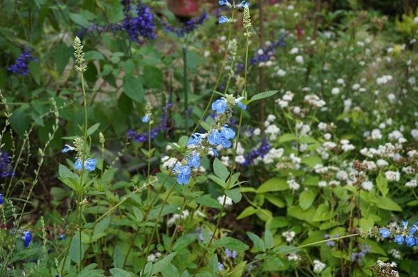 庭をひと回り_e0365880_22270453.jpg