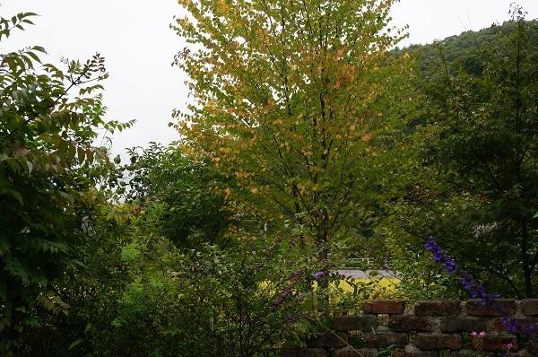 庭をひと回り_e0365880_22271362.jpg