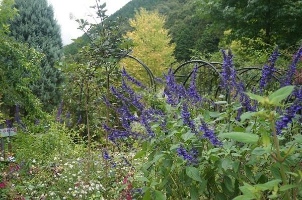庭をひと回り_e0365880_22283071.jpg