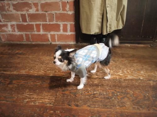 coat…_d0228193_11280929.jpg