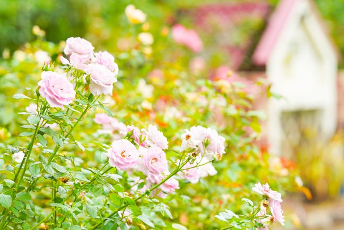 秋の日比谷花壇大船フラワーセンター_b0145398_18274508.jpg