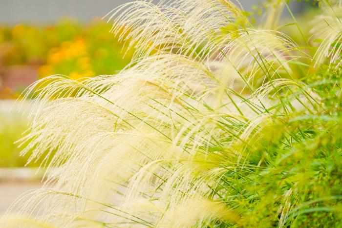 秋の日比谷花壇大船フラワーセンター_b0145398_19373872.jpg