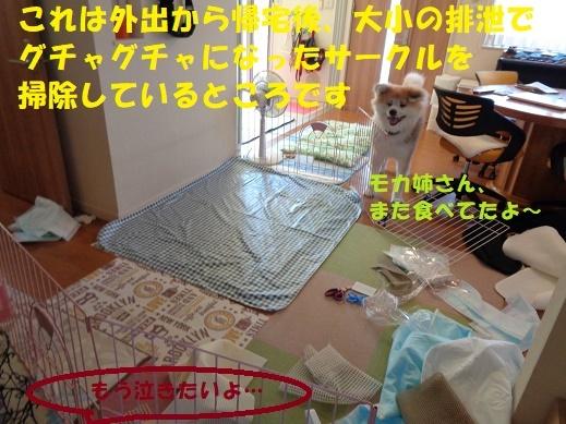 f0121712_00021276.jpg