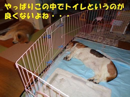 f0121712_00094940.jpg