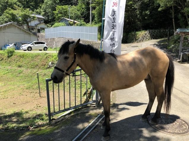 馬と鹿_b0409627_15370206.jpg