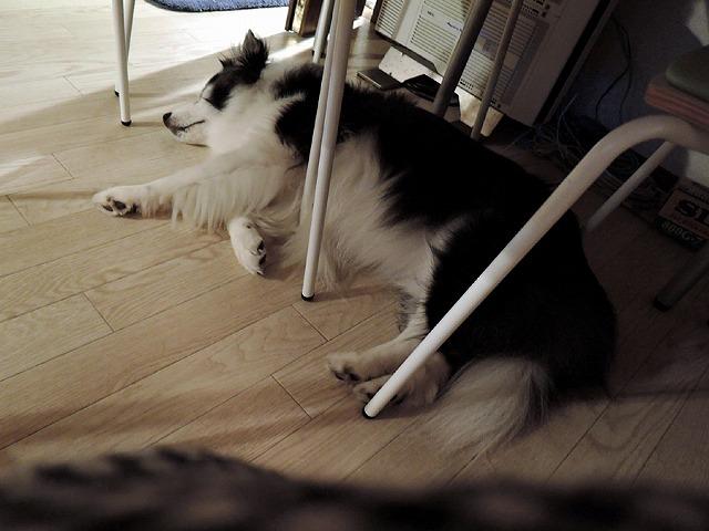 散歩屋日誌【お泊り保育編 3】_c0062832_02435657.jpg
