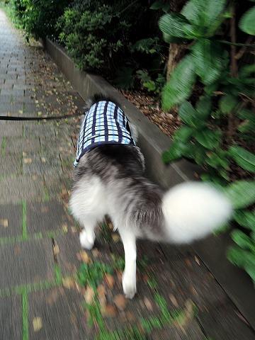 散歩屋日誌【お泊り保育編 3】_c0062832_02435740.jpg