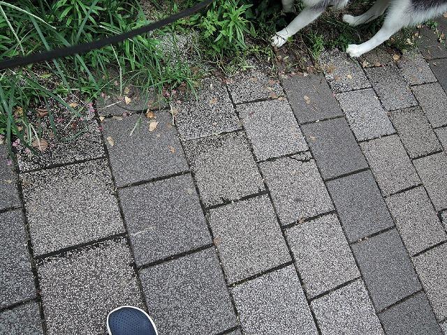 散歩屋日誌【お泊り保育編 3】_c0062832_02435784.jpg