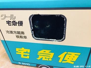 """金沢にある""""猫カフェ""""_e0145332_17095406.jpg"""