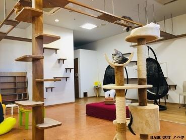 """金沢にある""""猫カフェ""""_e0145332_17101409.jpg"""