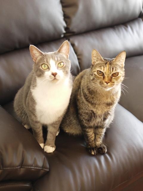 猫のお留守番 天ちゃん麦くん茶くん〇くんAoiちゃん編。_a0143140_22511651.jpg