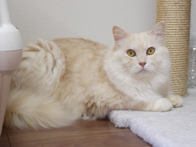 猫のお留守番 天ちゃん麦くん茶くん〇くんAoiちゃん編。_a0143140_22515380.jpg