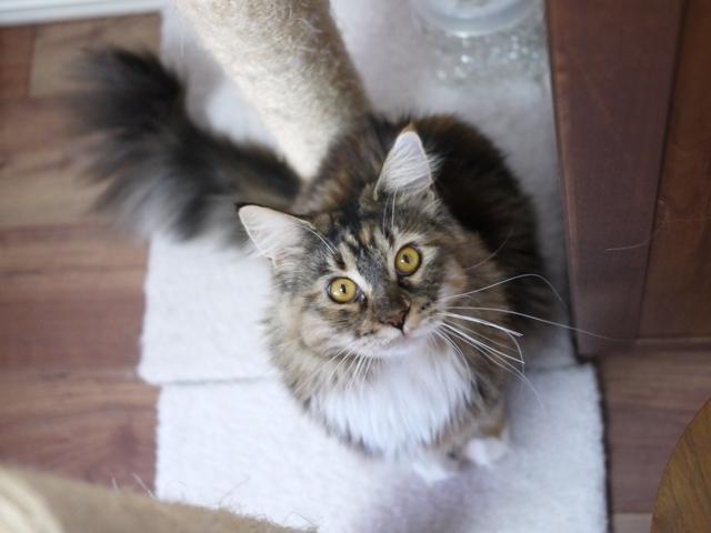猫のお留守番 天ちゃん麦くん茶くん〇くんAoiちゃん編。_a0143140_22524373.jpg