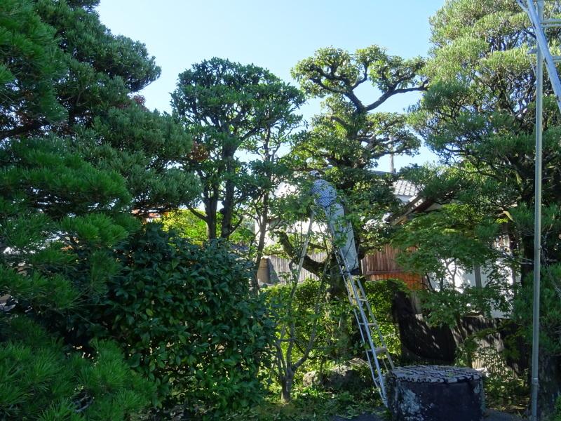 秋の新庭特別公開_f0101949_16265098.jpg