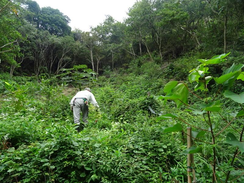 草刈り場所が多すぎる・・・孝子の森_c0108460_17393710.jpg