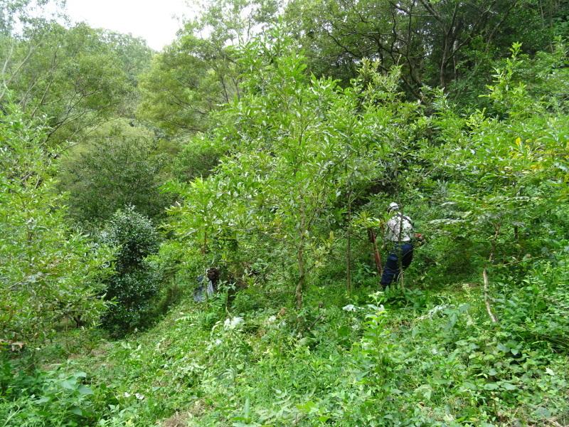 草刈り場所が多すぎる・・・孝子の森_c0108460_17420855.jpg