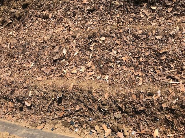ニンニク植え付け、3回目の大根種蒔き:9・20、22_c0014967_12212089.jpg