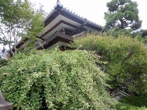 萩の寺で弦楽四重奏を聴く_b0102572_11545399.jpg
