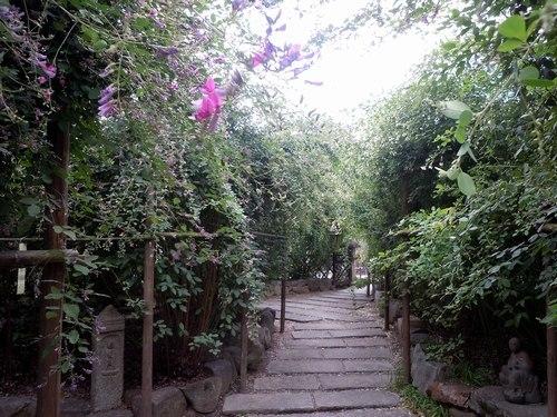 萩の寺で弦楽四重奏を聴く_b0102572_11552153.jpg