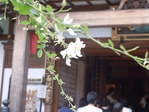 萩の寺で弦楽四重奏を聴く_b0102572_11560386.jpg