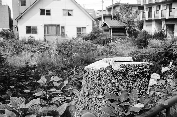 切り株の菌類と台風被害家屋のカビ_c0182775_16294854.jpg