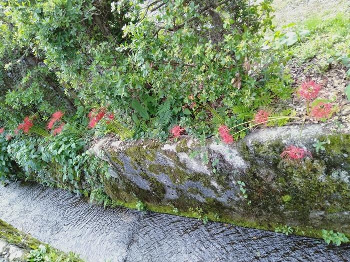 彼岸花と赤い実_a0199979_19585550.jpg