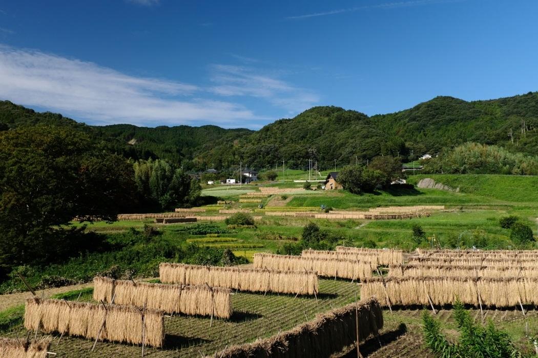 収穫の秋 常陸太田市町屋地区 2019.09.22_e0143883_17300219.jpg