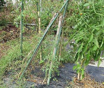 9月23日「台風被害」_f0003283_03571722.jpg