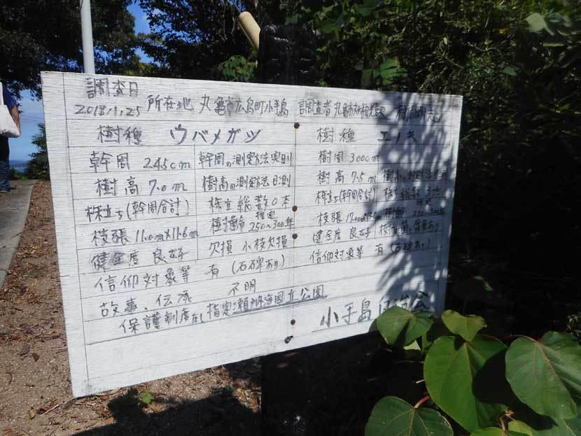 小手島(おてしま)_e0066586_07270172.jpg