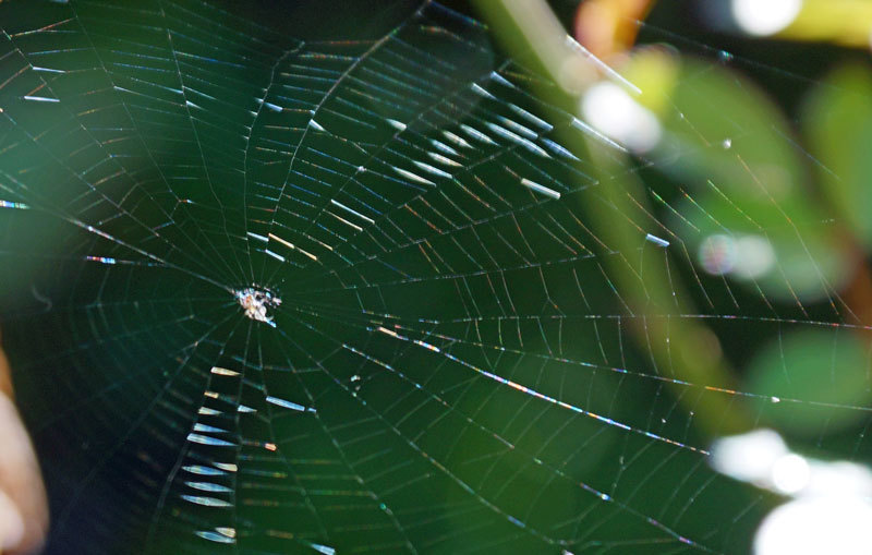 クモの巣_d0162994_09401774.jpg