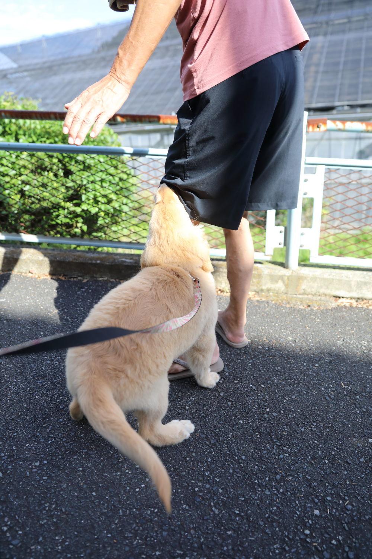 お散歩デビュー!_b0275998_09475048.jpg