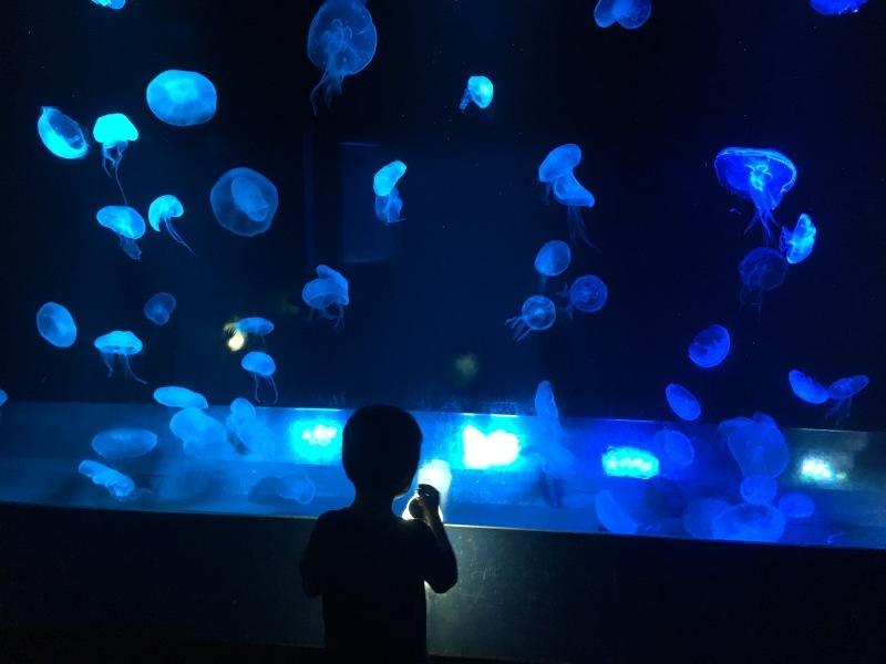 幻想的な夜の京都水族館  *夏休み京都鉄道旅⑥*_d0367998_22130448.jpeg