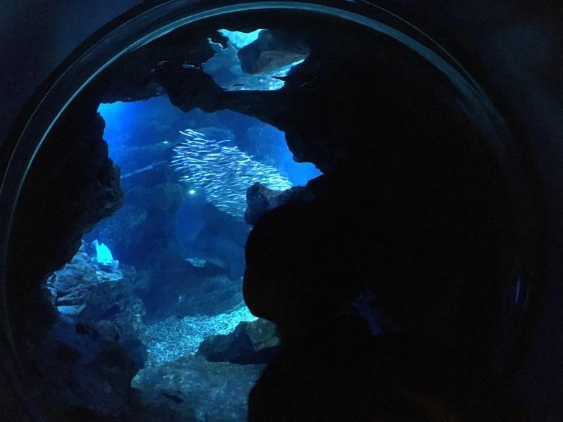 幻想的な夜の京都水族館  *夏休み京都鉄道旅⑥*_d0367998_22134128.jpeg