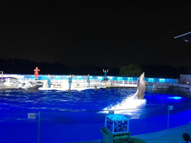 幻想的な夜の京都水族館  *夏休み京都鉄道旅⑥*_d0367998_22155395.jpeg