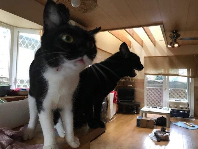 マーベラス譲渡会と猫のお見合い_f0242002_14303671.jpg
