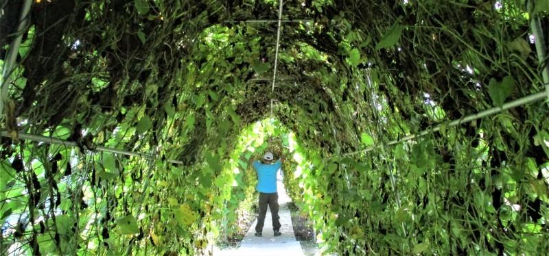 あさがおトンネル/黒姫高原_b0163804_14294072.jpg