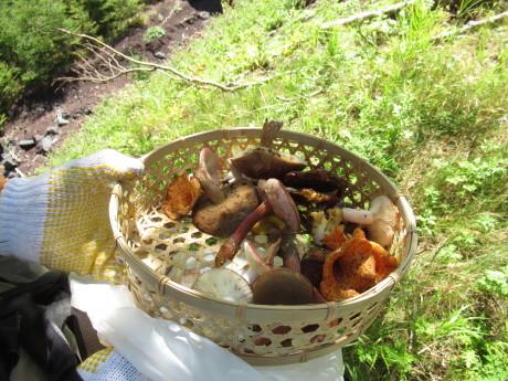 2019年9月6-7日山中湖大倉山荘ベースにキノコ狩り、バーベキュー_c0242406_13145195.jpg