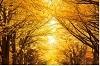 秋と言えば紅葉!みんなに見せたい秋の風景ショット2019