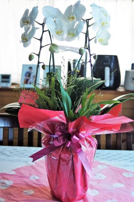 ■お誕生日プレゼント【アメリカ東海岸在住の二女から 胡蝶蘭/オンシジュウムの寄せ植えが届きました♪豪華絢爛!!】_b0033423_09385388.jpg