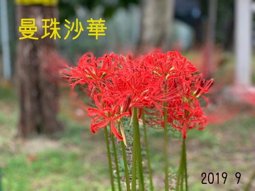 大阪市福島区のやきとり六源です!_d0199623_04143071.jpg