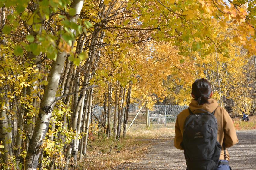 黄葉散策して、秋の動物達をチェック!ミート・ザ・ワイルド_d0112928_01505302.jpg