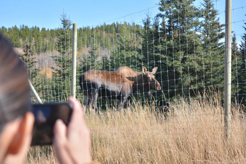 黄葉散策して、秋の動物達をチェック!ミート・ザ・ワイルド_d0112928_02032328.jpg