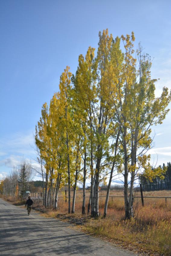 黄葉散策して、秋の動物達をチェック!ミート・ザ・ワイルド_d0112928_02090426.jpg