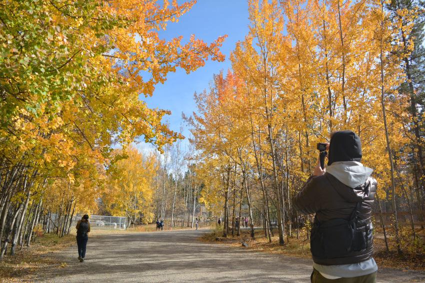 黄葉散策して、秋の動物達をチェック!ミート・ザ・ワイルド_d0112928_02101996.jpg