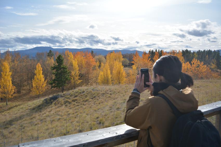 黄葉散策して、秋の動物達をチェック!ミート・ザ・ワイルド_d0112928_02140284.jpg