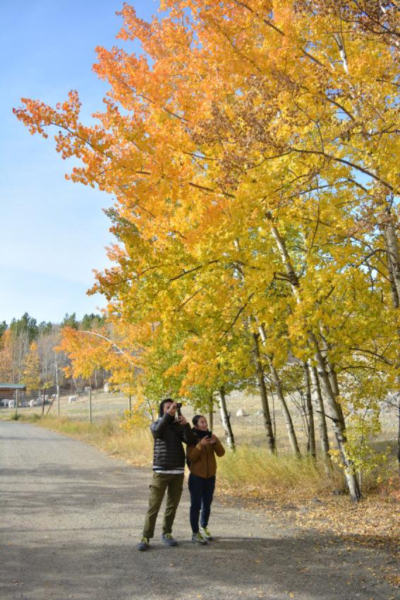 黄葉散策して、秋の動物達をチェック!ミート・ザ・ワイルド_d0112928_02193800.jpg