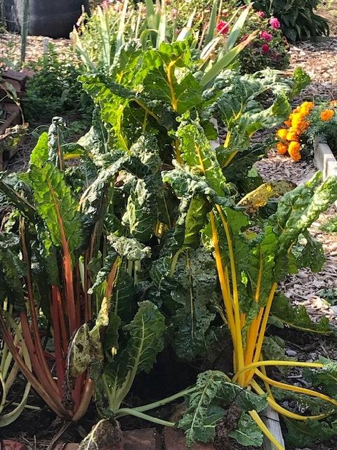 町の共同家庭菜園_d0269832_19293253.jpeg